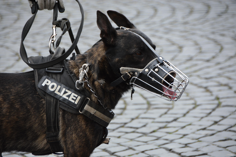 Ausbildung und Training für Diensthunde-Einheiten